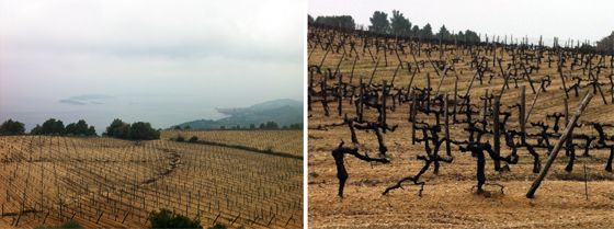 Vineyards up to 40 years old occupy sectors of the hills (photo Carlos Arruda)